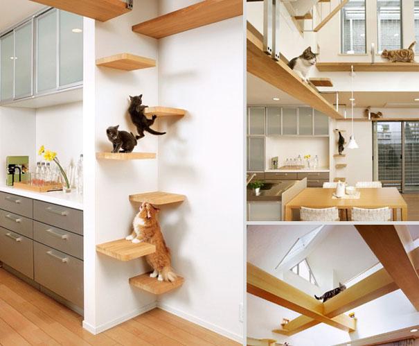 Cozinha é o lugar perfeito para virar playground de gatos.